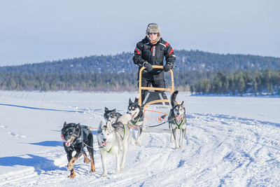 Dog sledding (day 1)