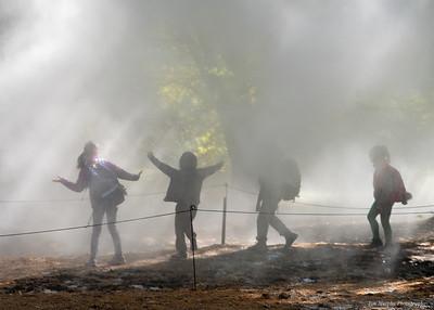Fog X FLO Arboretum
