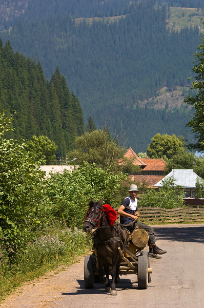 Farmer on a horse drawn cart, Moldavia, Romania