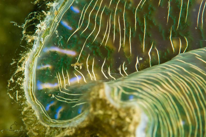 clam-4948.jpg