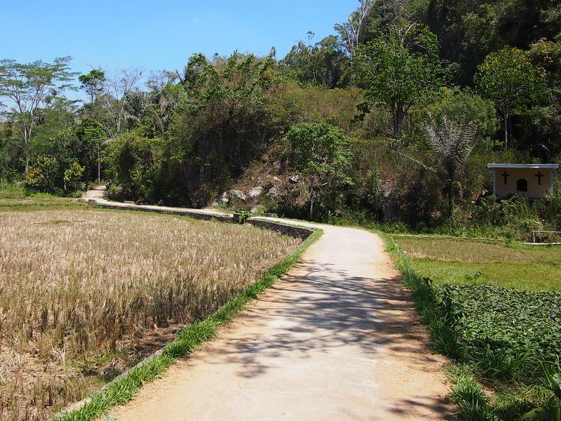 P9048826-rice-field-road.JPG