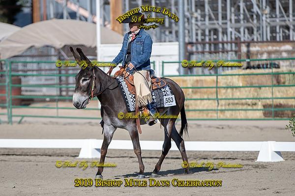 Donkey Western Dressage