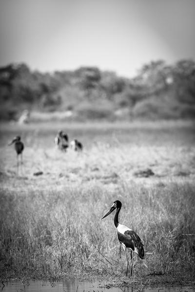 Botswana_June_2017 (563 of 6179).jpg