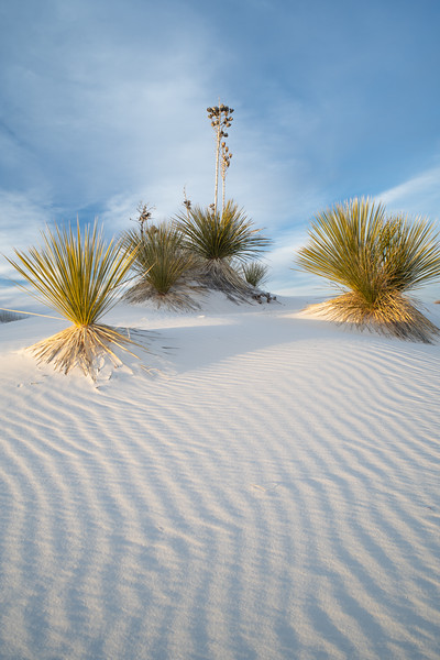 White Sands, 2019