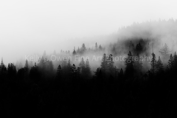 Shrouded Redwood Forest