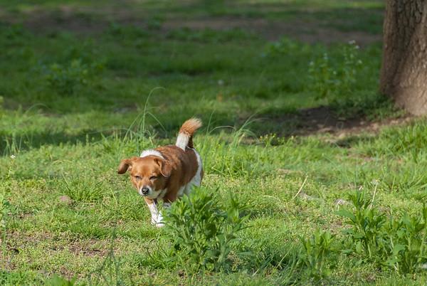 2012-04-24 Morris County Central Dog Park