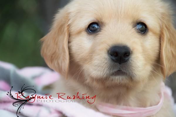 Thor & Maddie Puppies 2015