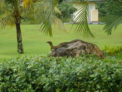 Judy's Guam Pics