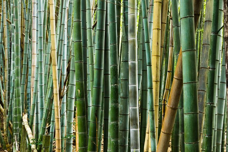 Bamboo Glowsticks