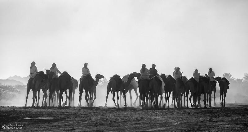 IMG_1233 BW-camels- B&W.jpg