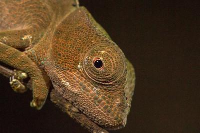 Malagasy Reptiles