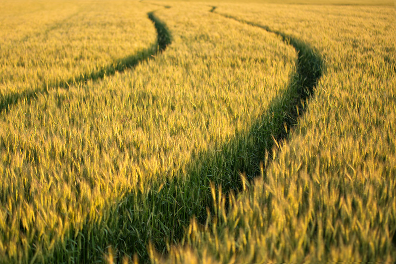 Wheat Tracks