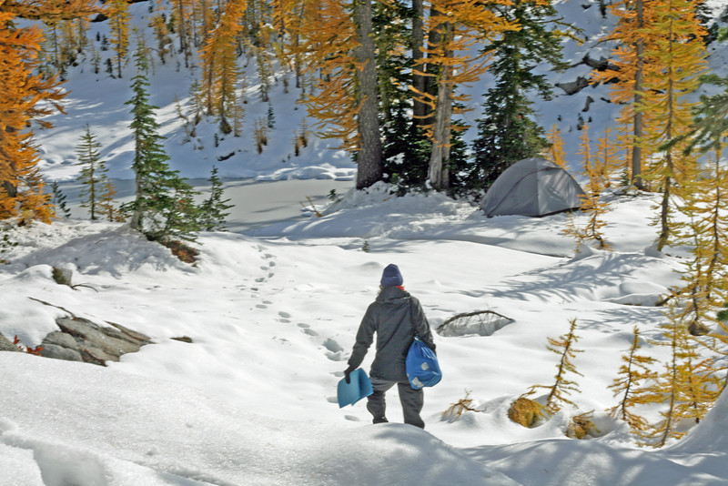 Larch and snowy campsite