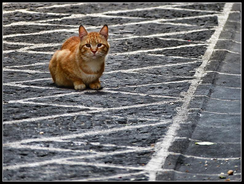 2015-06-Teggiano-107.jpg