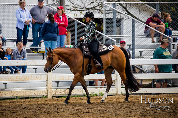 64 Western Pleasure Horses Sr