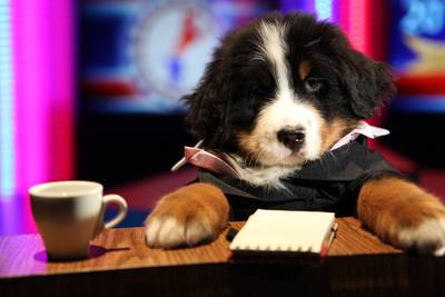 ". ""Presidential Debate moderator Candy Growly.\"" From \""The Year in Pup Culture\"""