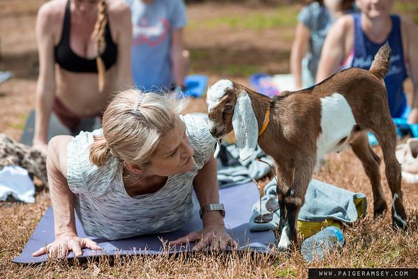 2019 (March) Anderson Yoga Center / Split Creek Farm - Goat Yoga