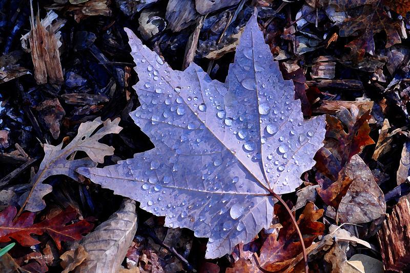 droplets 10-21-2011.jpg