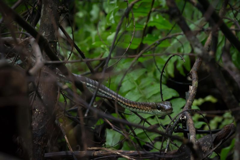 Borneo-2014-118.jpg
