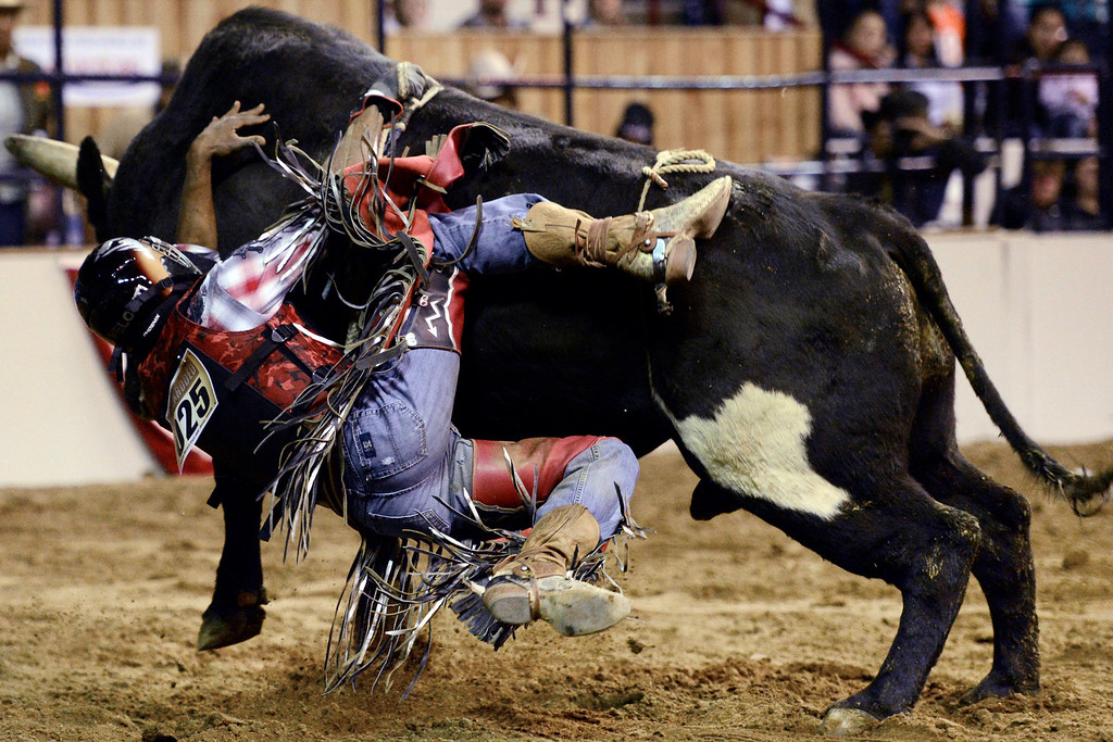 . DENVER, CO. - JANUARY 21:  Joe Stover loses his grip on his bull during the bull riding performance at the National Western Stock Show Martin Luther King Heritage Rodeo January 21, 2013 (Photo By AAron Ontiveroz / The Denver Post)