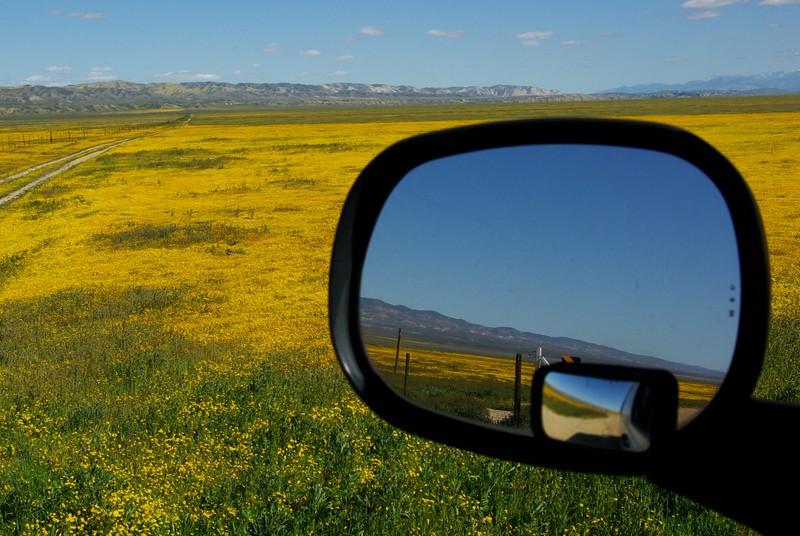 Goldfields, Carrizo Plains