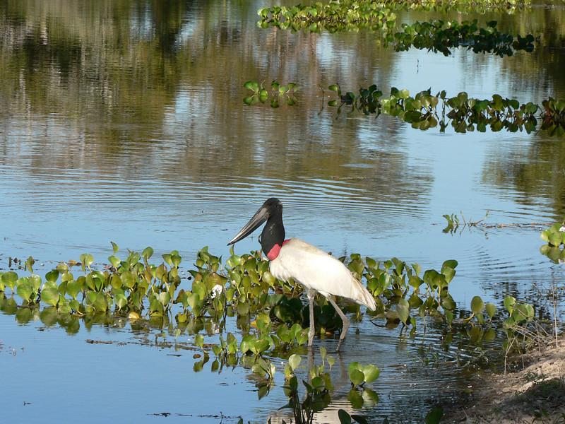 Pantanal_106.JPG