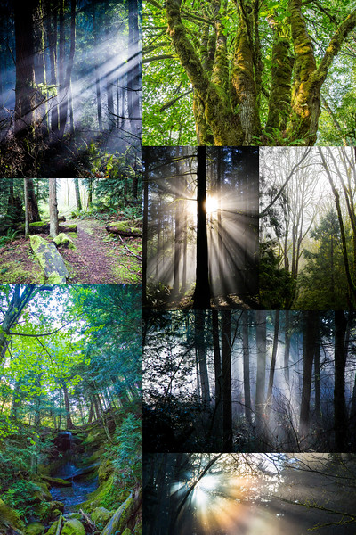 forest montage copy.jpg