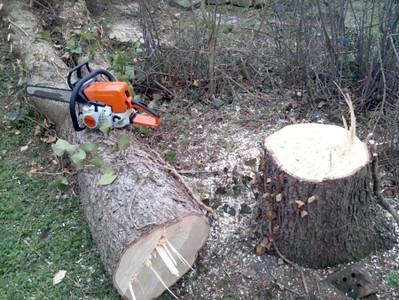 sawing01.jpg