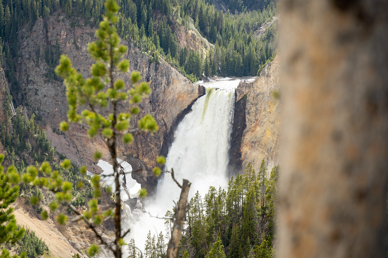 1906_01_yellowstone&teton-06115.jpg
