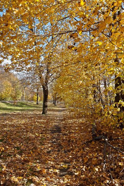 fall18.jpg