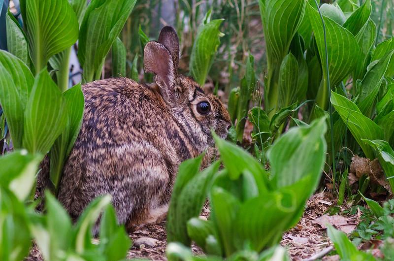 Rabbit Sits In Plants.jpg