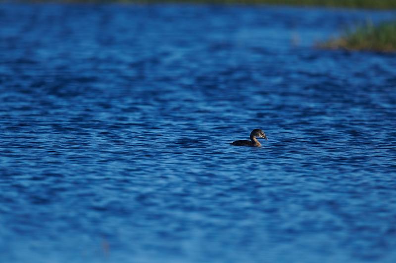 20181103 - Brazoria Wildlife Refuge-85B_3914.jpg