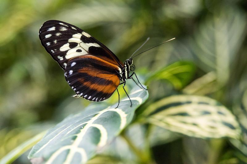 butterfly-285.jpg