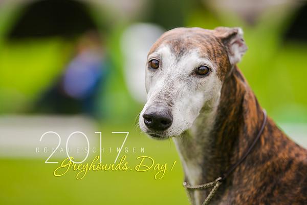 Donaueschingen-Greyhounds 12/08/17