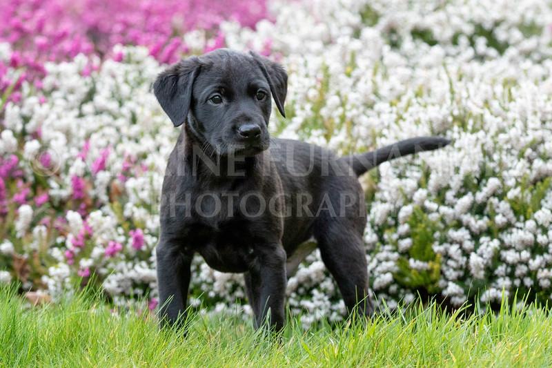 Weika Puppies 24 March 2019-6461.jpg