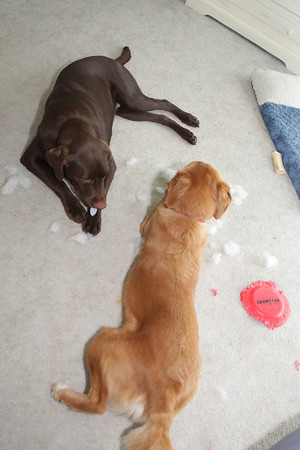 Jack & Maddie destroy another toy (2008-09-20)