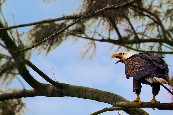Eagles Winter 2010