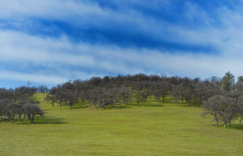 Green rolling hills and pleasant trees on the way back from Yosemite