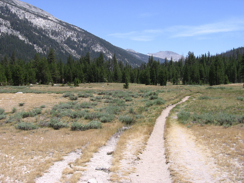 Multiple trail traces up Lyell Canyon.