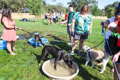2017-08-27: Grateful Dog 5K, Rocklin, CA