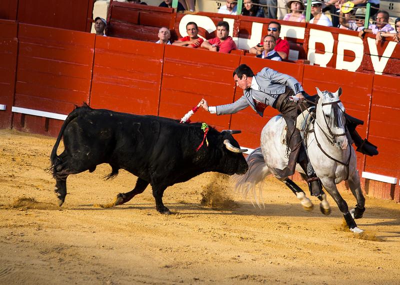 Bullfighting H21.jpg