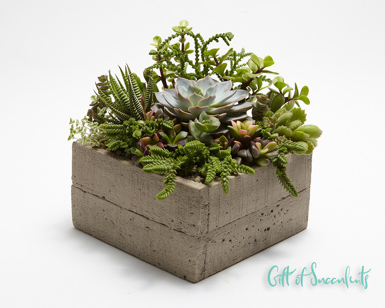 """Gift of Succulents """"Earthy"""""""