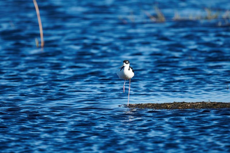20181103 - Brazoria Wildlife Refuge-85B_4095.jpg