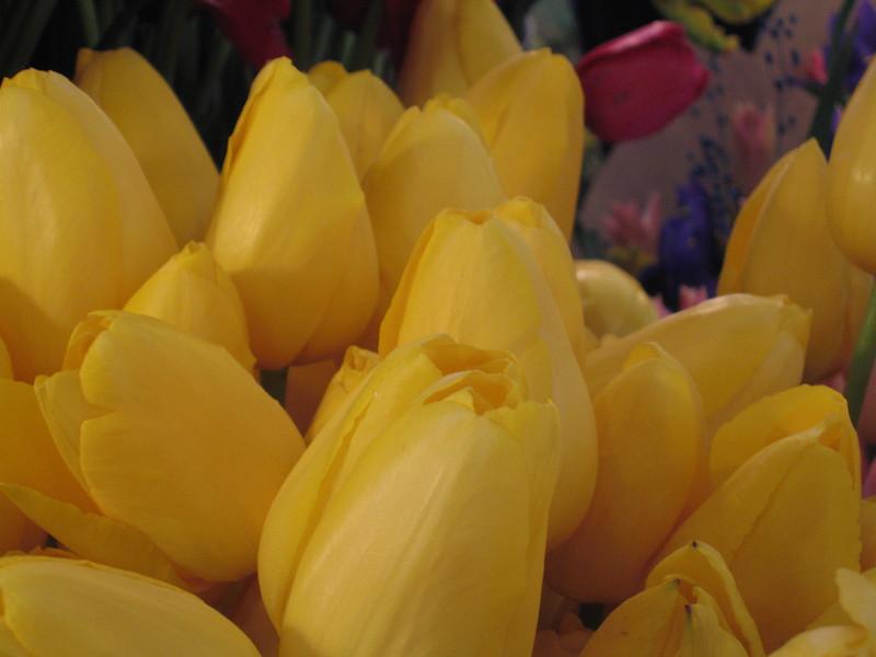 090504_WA_Sea PikeMkt Flowers_17.JPG