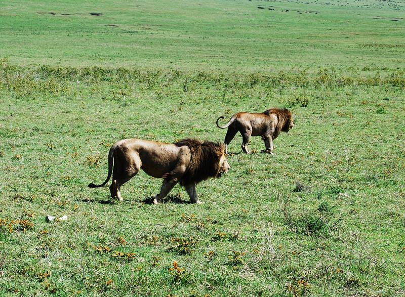 Ngorongoro (156).JPG