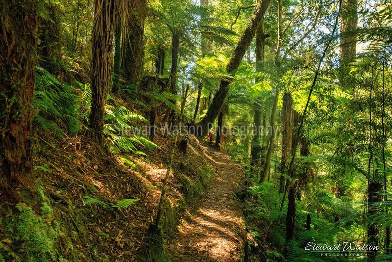 Whirinui  Forest Park, Minginui