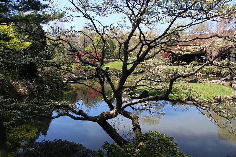 Sakura-0084.jpg