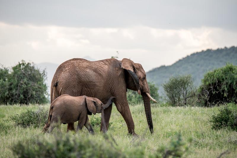 Samburu (53 of 70).jpg