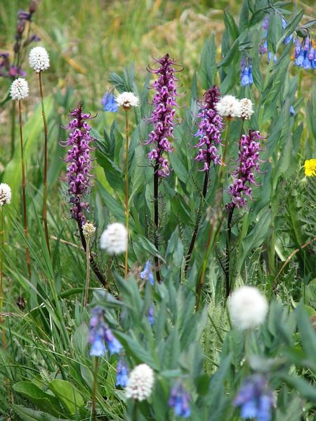 amh FLOWERS (1398).jpg