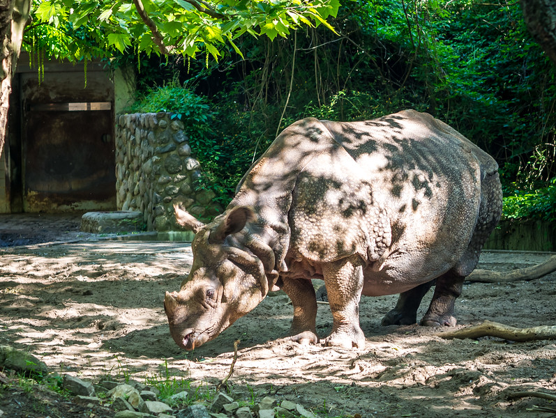 Rhino in Berlin Zoo